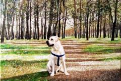 Perro de paseo en el campo